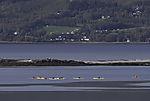 sea paddlers off island Grindöya