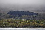 autumnal forest near Tromso