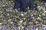 Herbstlaub am Baumstamm