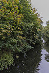 Herbst am Isebek Kanal